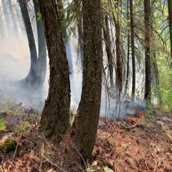 Flames creeping through the forest understory.
