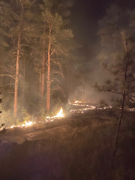 Small fire moving through Pines at night