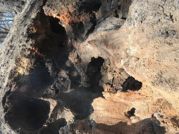 Burned stumps left large holes where they burned to the root tips