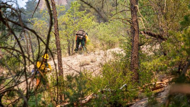 Image of Wildland Fire Sawyers working on the Tadpole Fire June 20, 2020