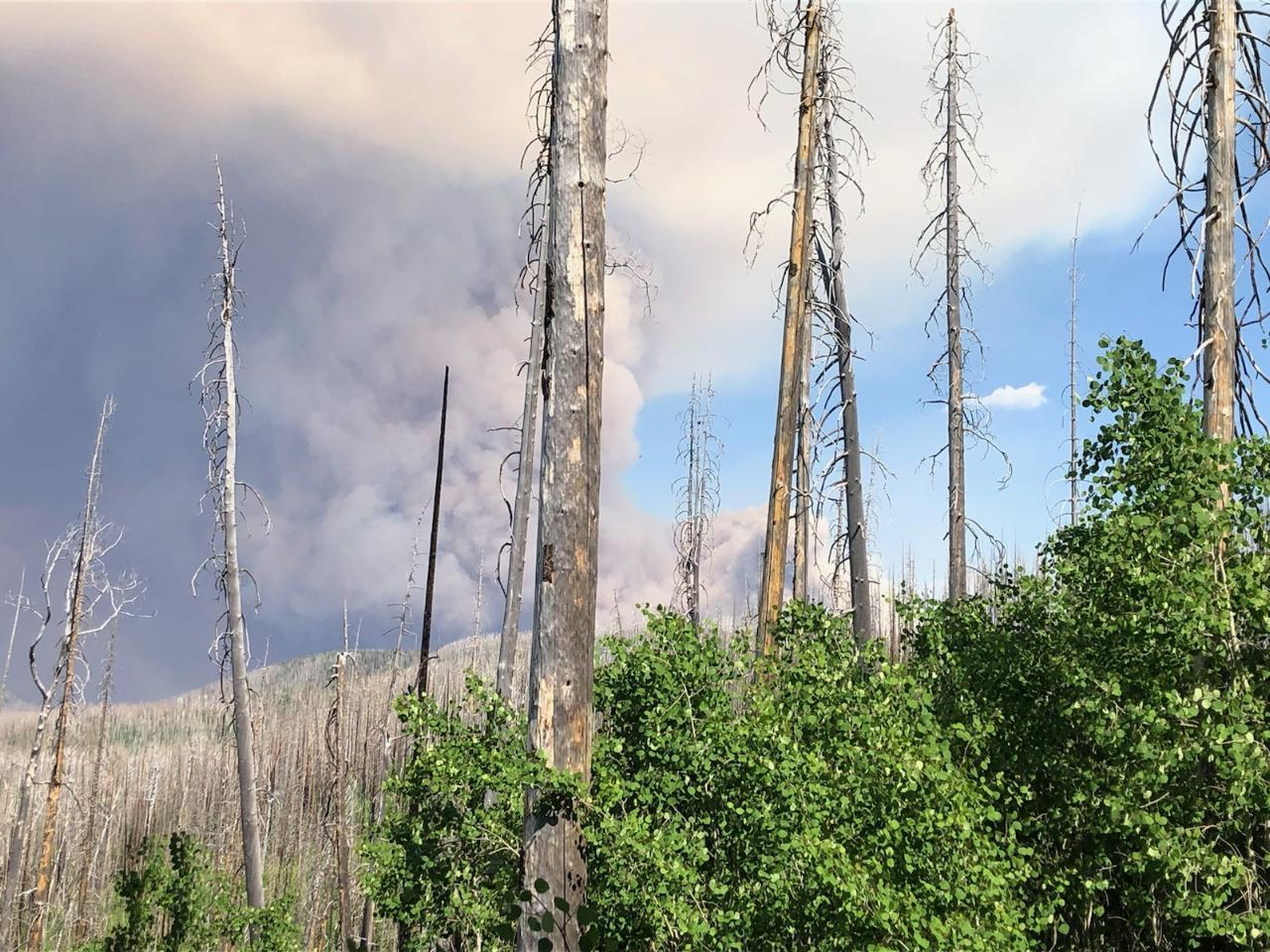 the Johnson Fire from the crest trail