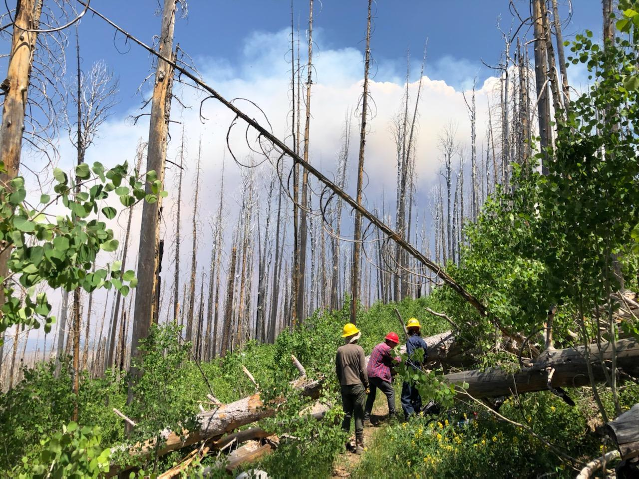 While the Gila Trail Crew clears the Crest Trail the Johnson Fire burns in the background