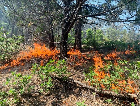 Fire consuming branches and pine needles on the ground