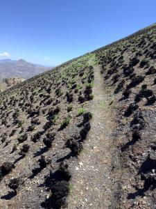 Soil burn severity varied as the fire crossed wilderness trails.
