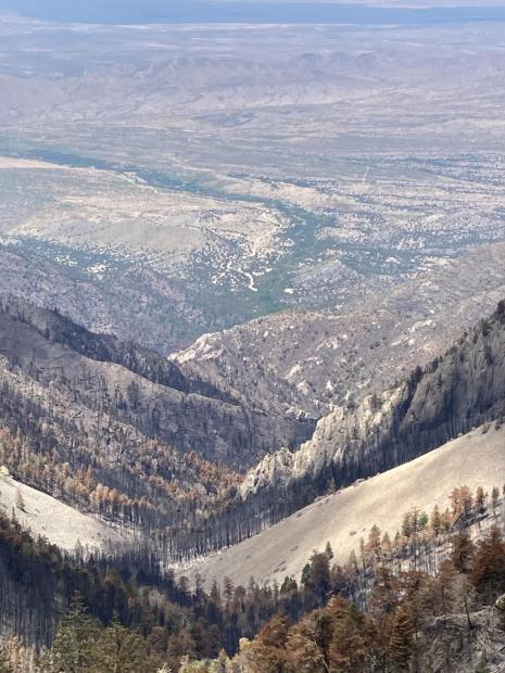 View of burned area.