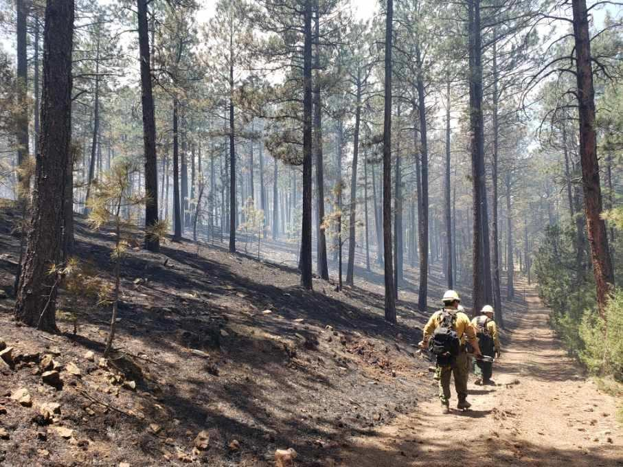 Firefighters working the Cuervito Fire