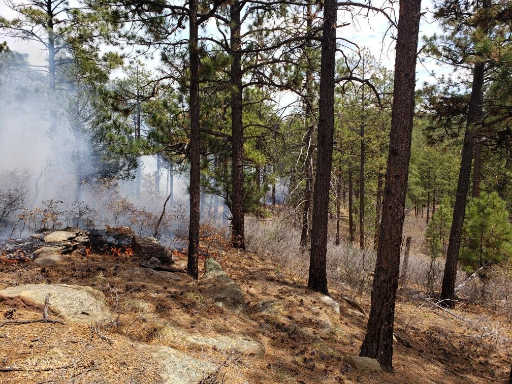 Low-intensity fire on the managed Cuervito Fire