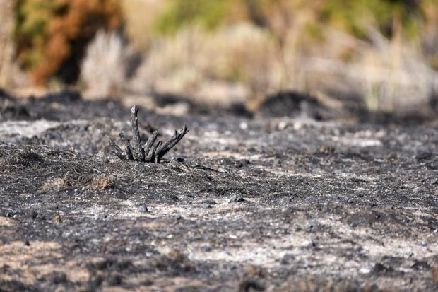 Burnt ground covered in ash.