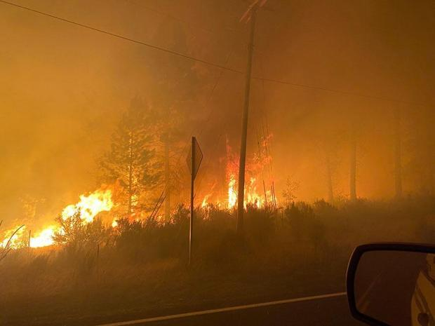 Fire burns brush and torches the length of a few trees along a roadside overnight, in an area shrouded with thick smoke
