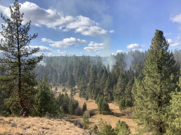 Image of forested area with smoke coming up