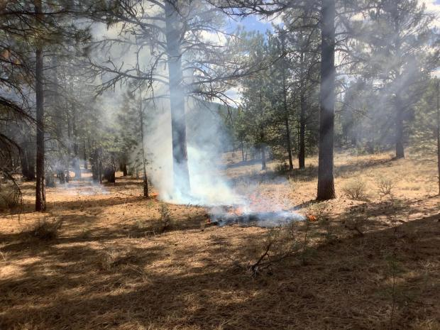 Image of low burning flames on the ground amongst timber.