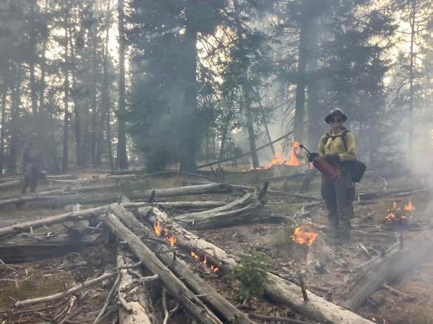 Image of fire fighter using a fire drip torch for ignitions.