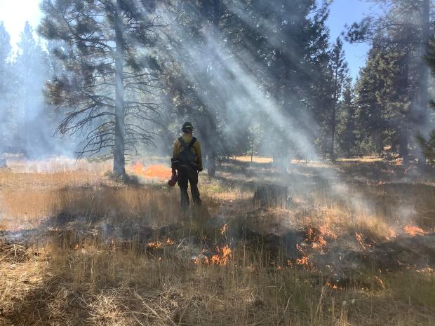 Fire fighter standing near low burning flames amongst trees.  Work being done in the Elk 16 L1 project area.