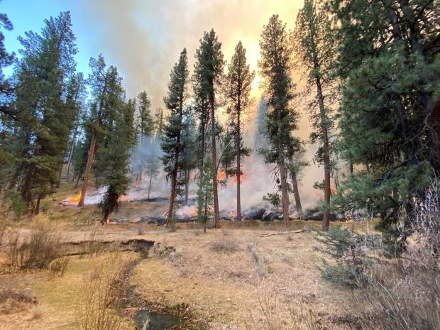 Image of flames burning low to the ground near trees in the George prescribed burn area.