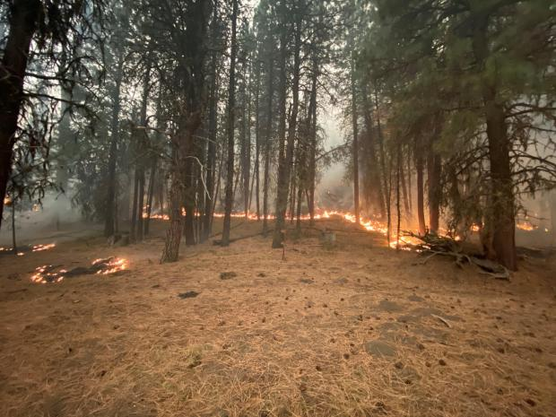 Image of good fire, low burning flames amongst trees in the George prescribed burn area.