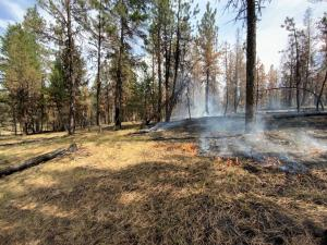 Image from Murderers Creek 6 prescribed fire area showing low burning flames.