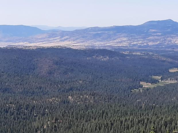 Image of the area of the Murderers Creek 6 prescribed fire area.
