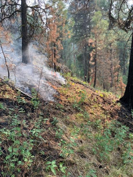 Image from Murderers Creek 6 prescribed fire area showing low burning flame.
