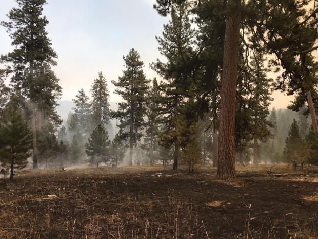 Fire effects following first day of ignitions show a patchy mosaic of low to moderate intensity burn with pockets of unburned, green grasses.