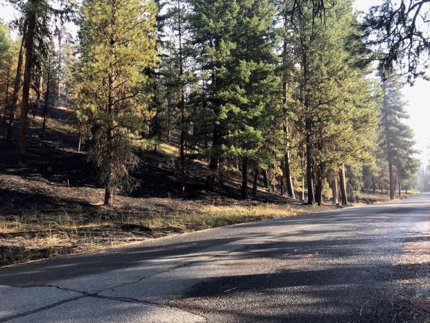 Roadway following Canyon66 Rx shows light understory burn