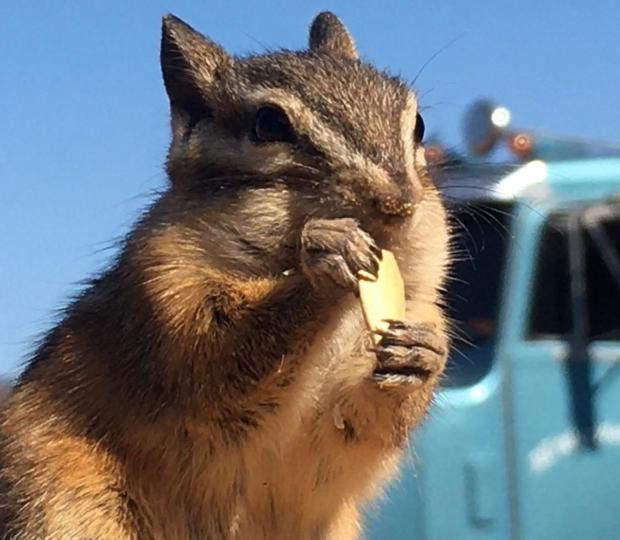 Firefighter got a photo of chipmunk visiting the fire