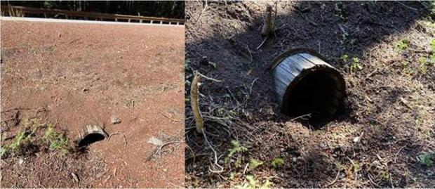 This historic wooden culvert, found by a Burned Area Emergency Response (BAER) Team, was fortunately not damaged by the Thielsen Fire. It was constructed in the early 1900s as part of the Umpqua River Highway that connected Roseburg to Diamond Lake.