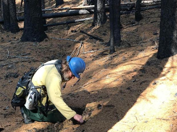 Geologist Bart Wills looking at the duff layer in low severity burn area on the Beachie Creek-Lionshead Fire area