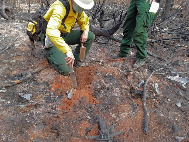 BAER specialists assess a small isolated patch of High Soil Burn Severity on the Beachie Fire. Small pockets of high soil burn severity are often associated with stumps or downed logs that smolder and burn for long periods of time.