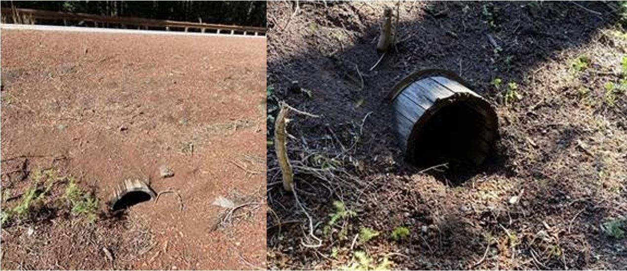 Wooden culverts in the Thielsen and Archie Creek burn areas