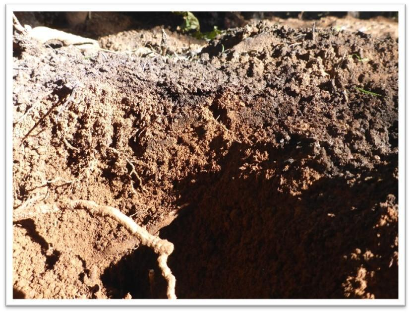 Example of high soil burn severity - surface structure destroyed, soil cover completely consumed, roots consumed