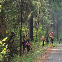 members of a hand crew cut small brush along the 29 road as prep for possible aerial ignition