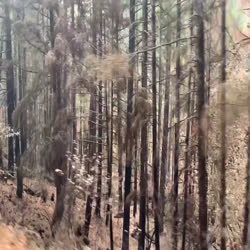 drive along smith fire and burned trees