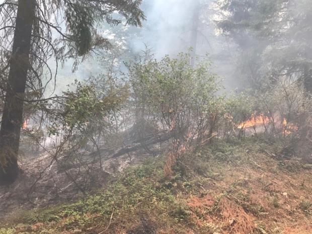 fire creeps under bushes, smith fire near Road 27 9/15
