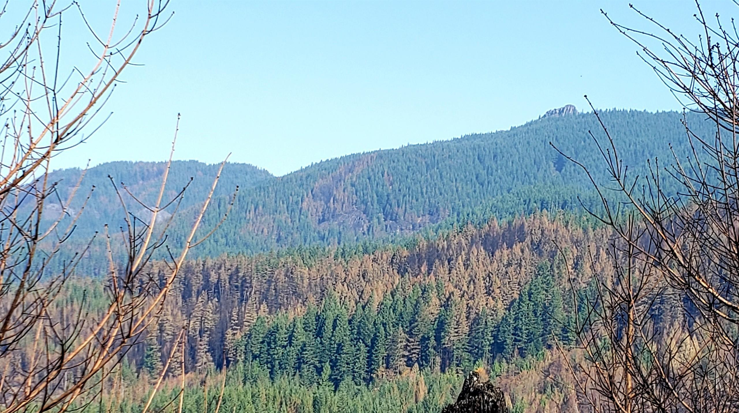 Mixed severity burn in Table Rock Wilderness