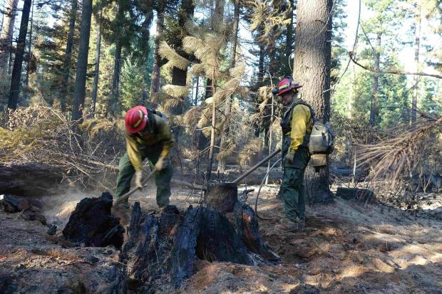 The two engine crew memebers were cooling off a large tree stump in Division N Sunday, Sept. 20.