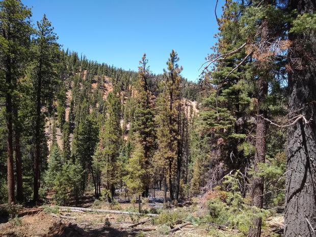 Photo of unburned trees within the fire perimeter