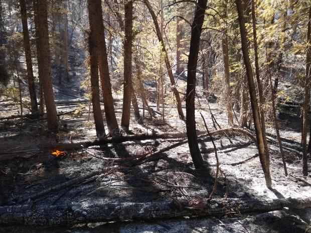 Photo of ground fuels burning in the fire
