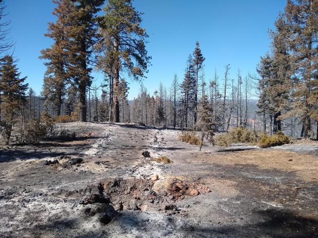 Photo of burned area within the perimeter