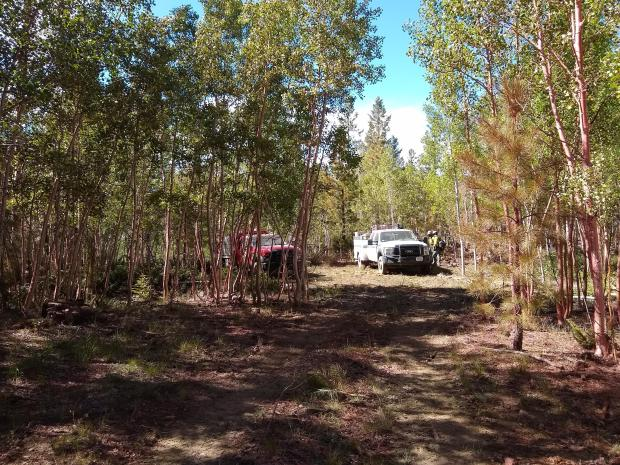 Photo of pink aspen and fire engines