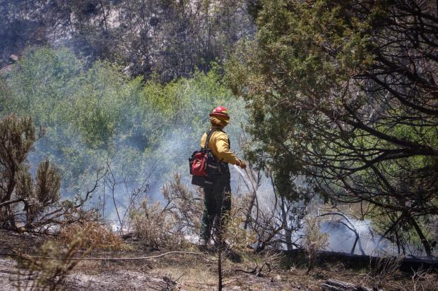 One firefighter stands next to a tree, using a water hose to drown out spots of heat. Smoke is rising from the ground.