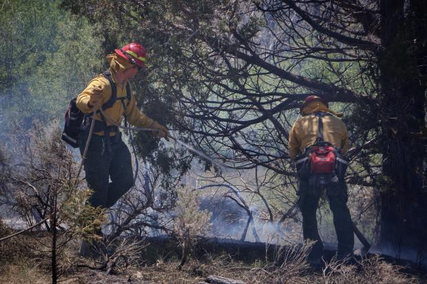 Two firefighters  stand in smoke using a water hose to drown spots of heat next to a tree.