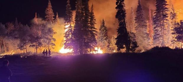 Fire illuminates a night landscape. Several evergreen trees are outlined in the black sky with an orange fire glow beind.