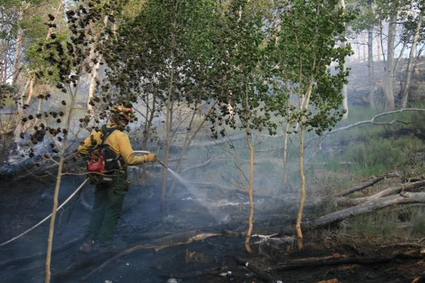 A firefighter sprays an area of heat and smoke in an evergreen forest.
