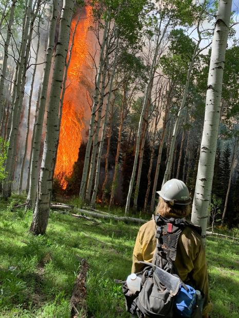 A firefighter stands facing a tree that is engulfed in flames.