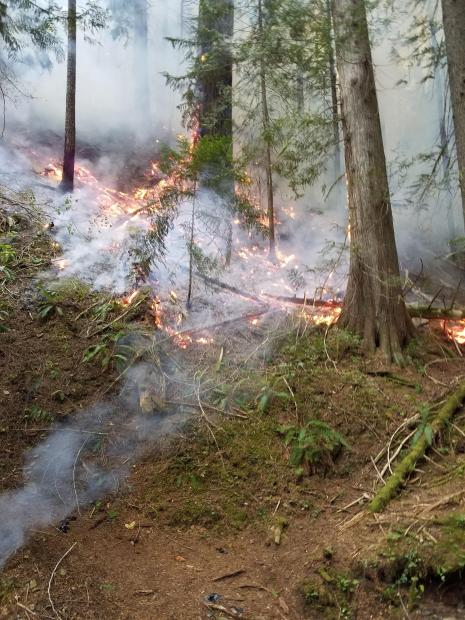 Smoldering forest lanscape with occasionl embers, flames and standing smoldering or aflame trees.