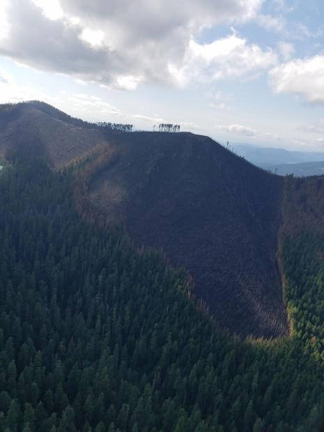 Aerial view of a swath of burned down trees on the face of a forested mountainside