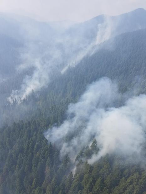 Aerial view of smoke columns and patches rising from a forested landscape.