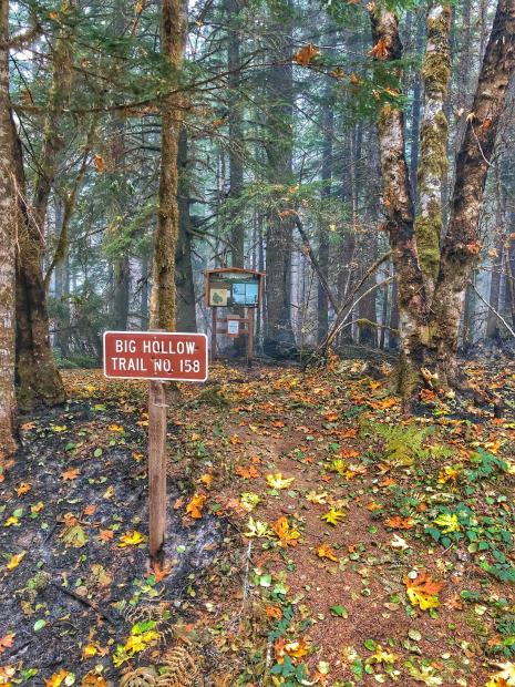 Here is a look inside the #BigHollowFire burn area at the Big Hollow Trailhead. As you can see the fire stayed low to the ground and crept along the florest floor. Rain has helped cool the area and decrease fire spread. Photo by Matt Mawhirther.