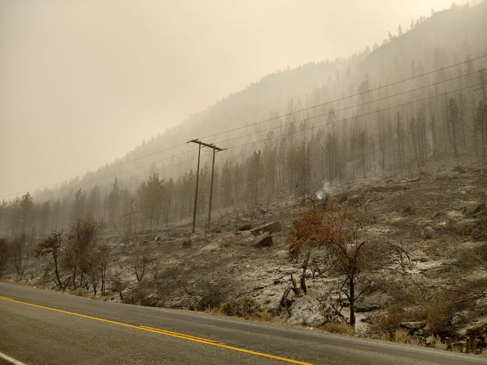 ash, power poles and power lines, hazy view of forest area that has been underburned by the Pearl Hill Fire