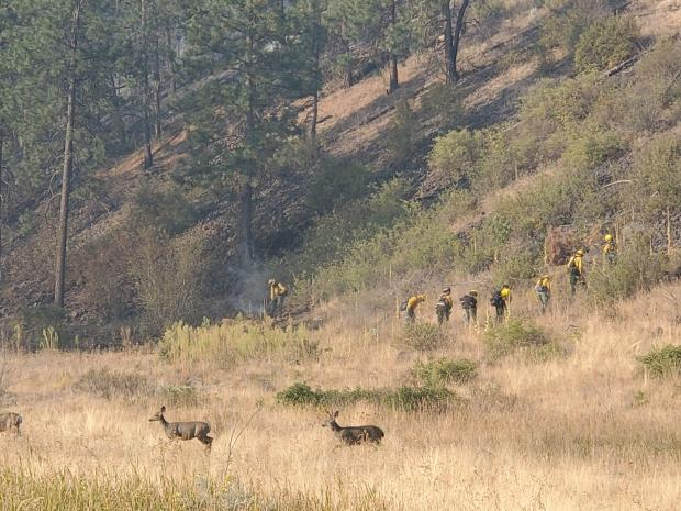Deer run away from the fire line while firefighters rush in